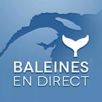 Groupe de recherche et d'éducation sur les mammifères marins (GREMM) – Baleines en direct